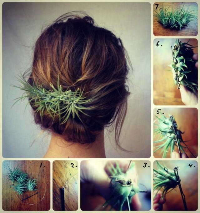 hairplant-961x1024