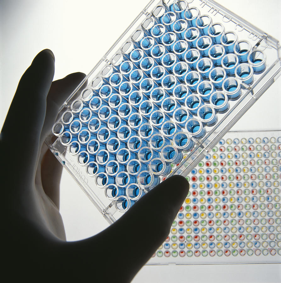 A quick guide to Elisa test